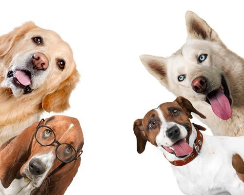 Gdzie trafiają bezpańskie psy z gminy Bychawa?